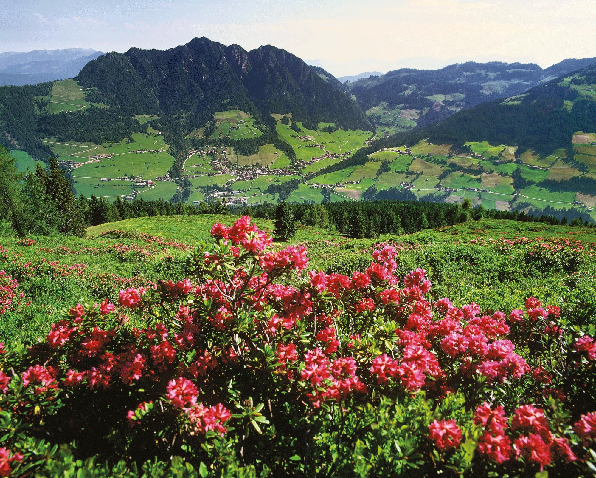 Ausblick Alpbachtal Sommerurlaub Tirol