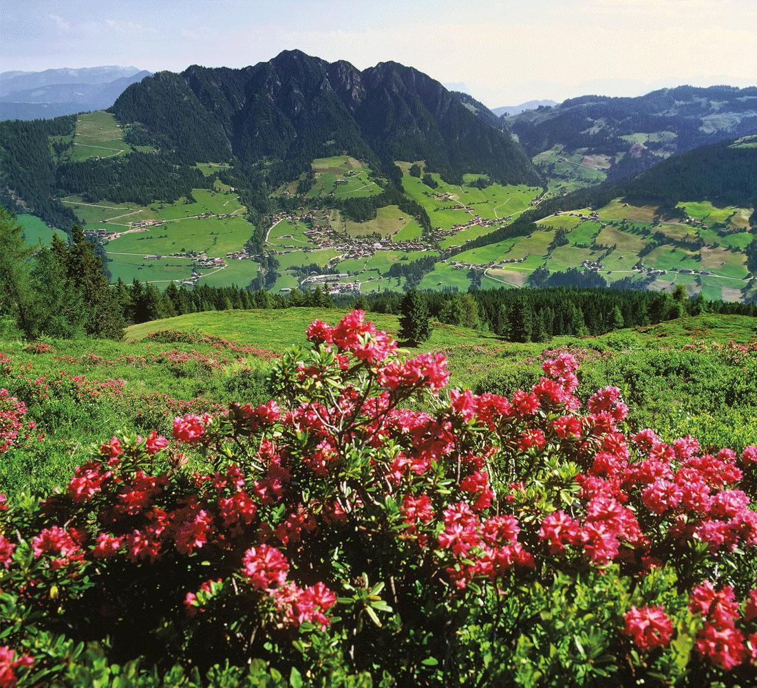 Sommerurlaub und Wellnessurlaub in Alpbach im Alpbachtal
