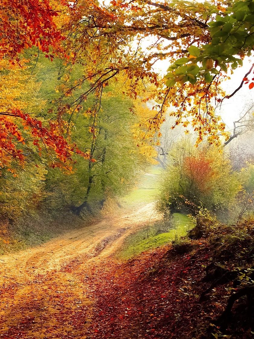 Herbstlandschaft im Alpbachtal_Spaziergang im Urlaub im Wellnesshotel Alpbacherhof
