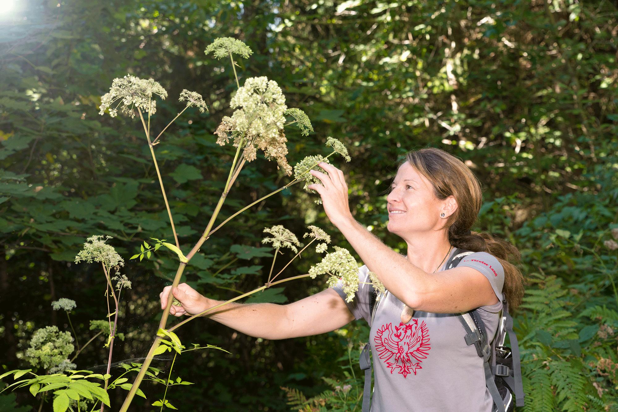 Waldbaden Pflanzenkunde im Aktivurlaub Alpbachtal