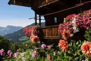 Alpbach Bauernhof mit Blumen