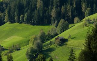Grüne Sommerwiesen in Alpbach im Sommerurlaub im Alpbachtal