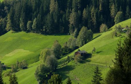 Grüne Sommerwiesen Alpbach Sommerurlaub Alpbach