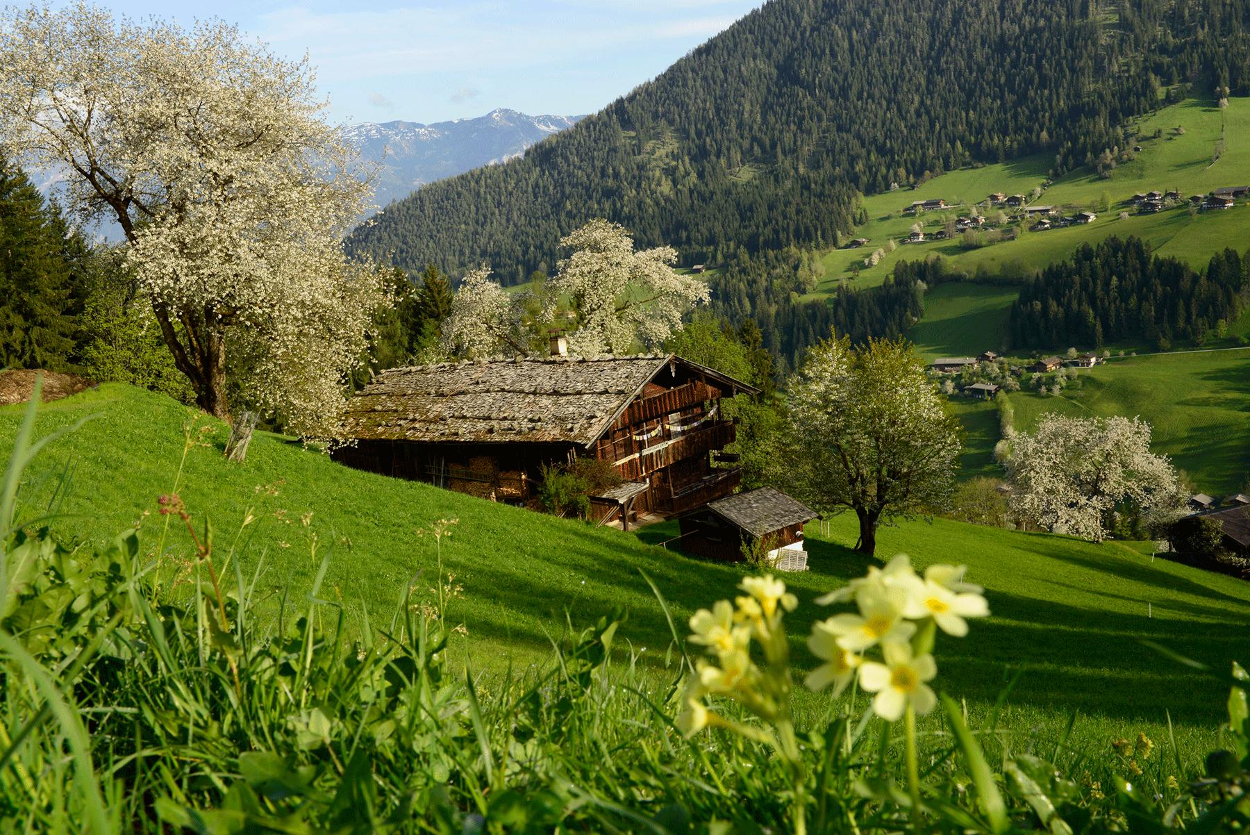 Neader Bauernhof im Frühling beim Urlaub Frühling Alpbachtal
