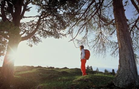 Wanderer Alpbachtal zwischen Bäumen vom Wanderhotel Tirol